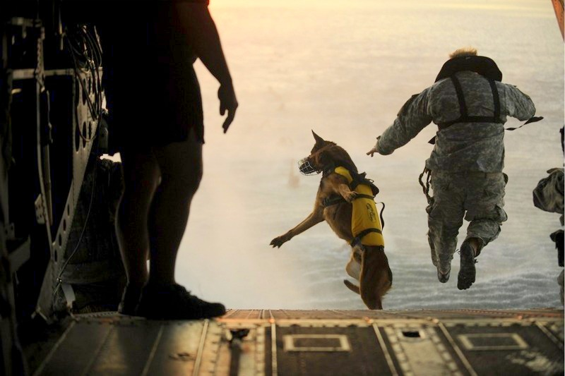110301-F-RR679-717       A U.S. Army soldier with the 10th Special Forces Group and his military working dog jump off the ramp of a CH-47 Chinook helicopter from the 160th Special Operations Aviation Regiment during water training over the Gulf of Mexico as part of exercise Emerald Warrior 2011 on March 1, 2011.  Emerald Warrior is an annual two-week joint/combined tactical exercise sponsored by U.S. Special Operations Command designed to leverage lessons learned from operations Iraqi and Enduring Freedom to provide trained and ready forces to combatant commanders.  DoD photo by Tech. Sgt. Manuel J. Martinez, U.S. Air Force.  (Released)